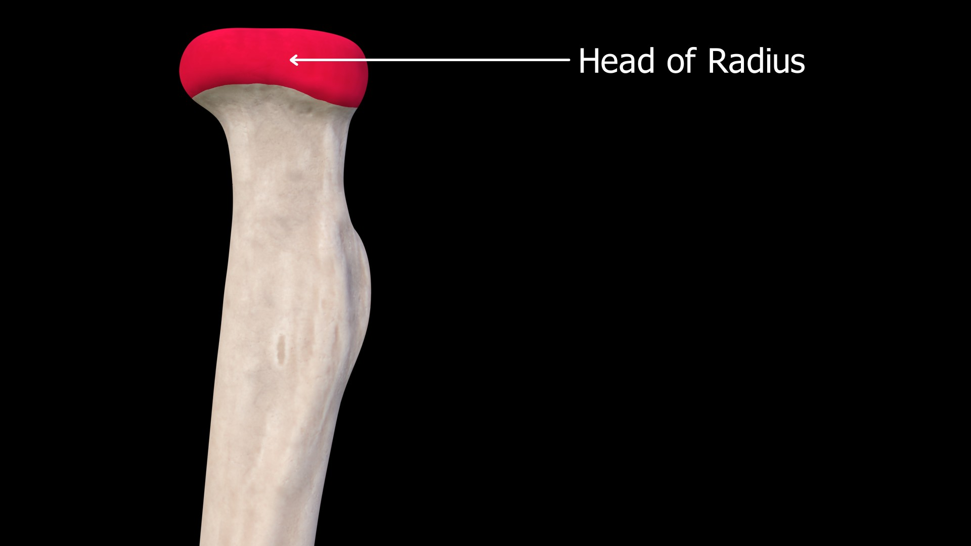 Image showing Head of the Radius