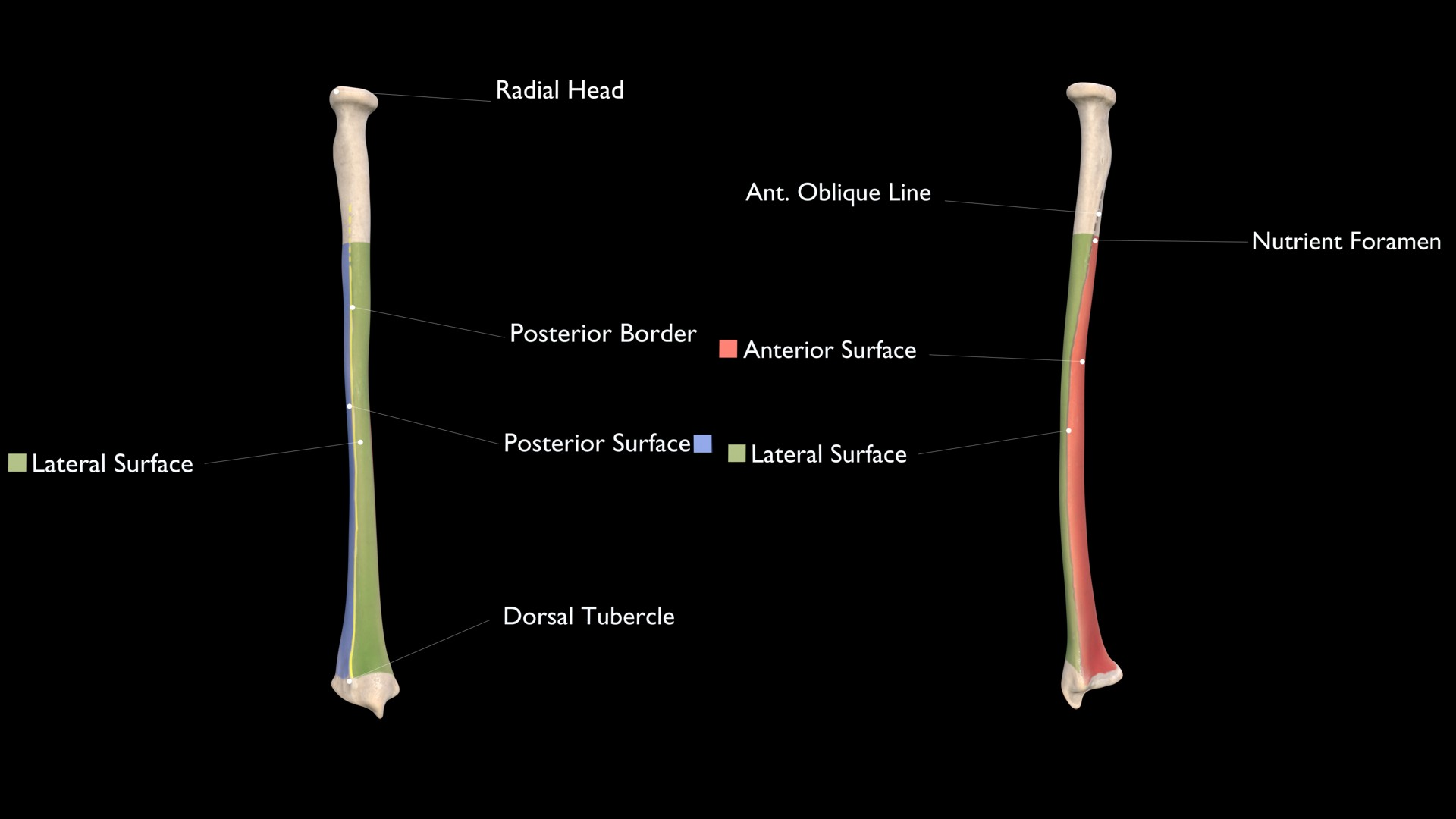 Lateral Surface of Radius