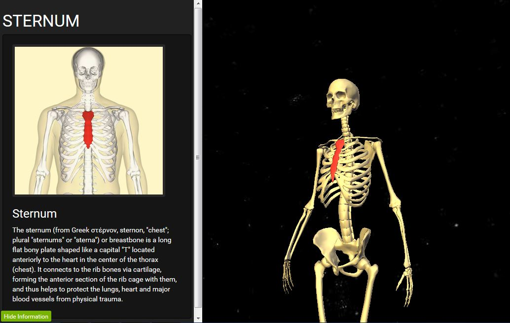 Skele(BETA) - A 3d approach to anatomy